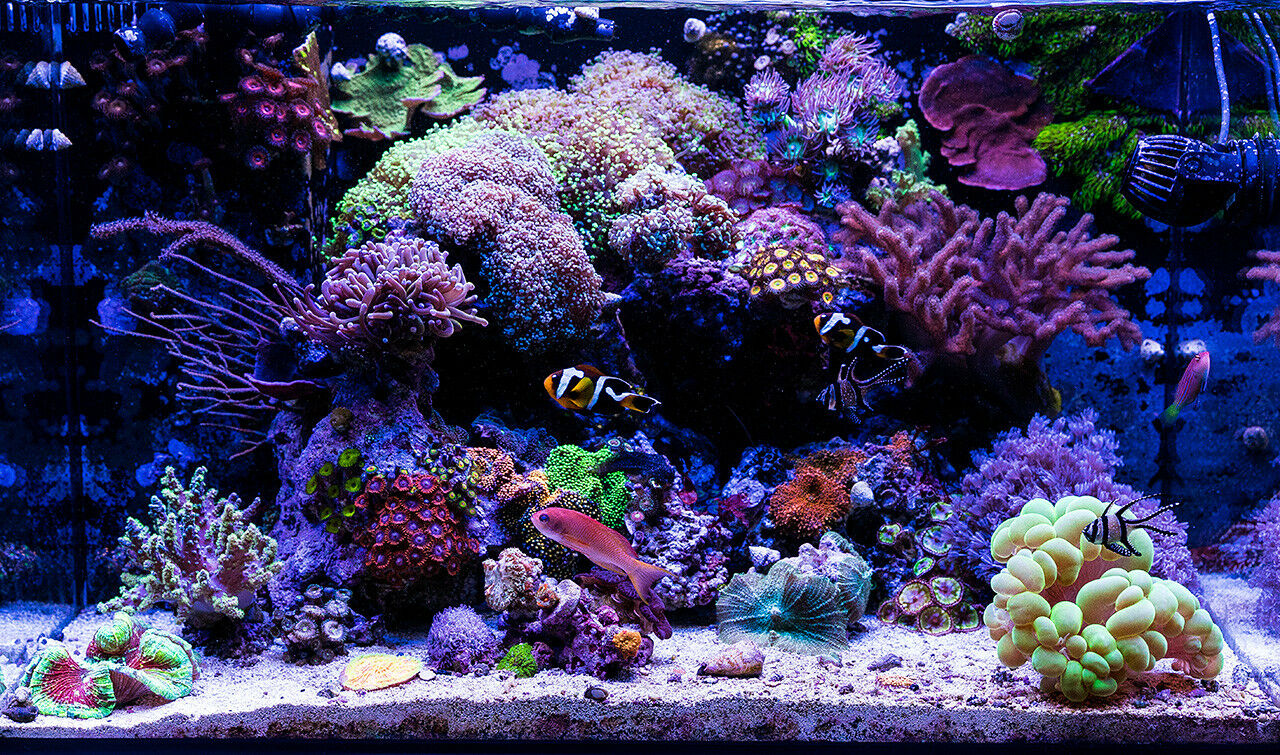 Rosso Reef Aquatics Epistar XR216w Saltwater Saltwater Saltwater LED Marine Reef Tank Aquarium Light ade707