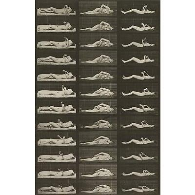 13. EADWEARD MUYBRIDGE (1830-1904) A selection of 50 plates from Animal Lo... Lot 13