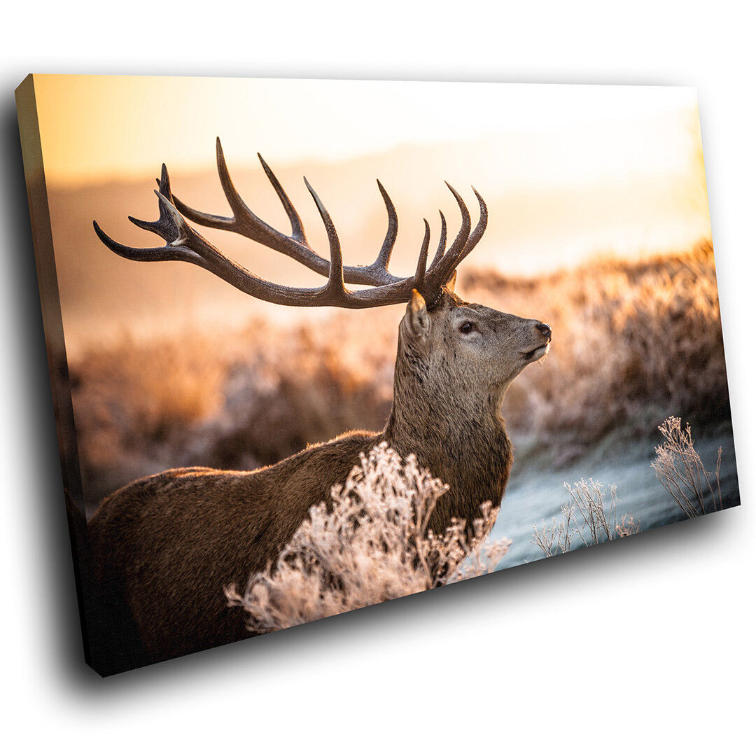 A576 Stag Sunset Grün braun Funky Animal Canvas Wall Art Large Picture Prints