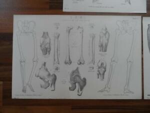 Antique-prints-19th-century-Victorian-era-prints-of-anatomy-etc