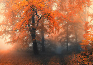 Autumn Forest Mist Red Leaves 3D Full Wall Mural Photo Wallpaper