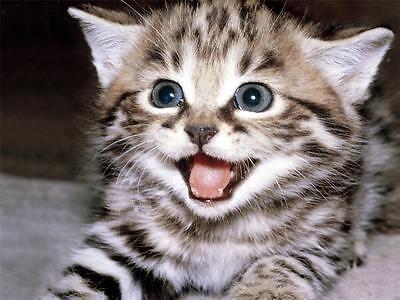 Resultado de imagem para happy cat