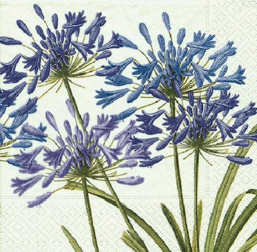 Agapanthus Floral almuerzo Lujo papel tradicionales Servilletas 20 En Pack