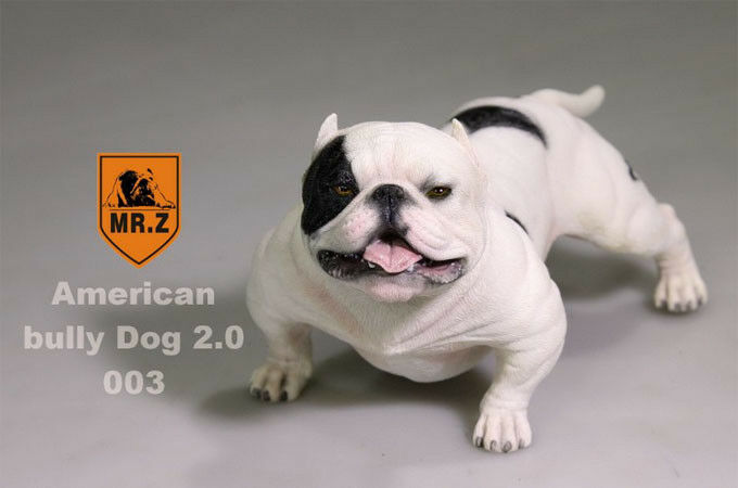 Mr.Z 1 6 American bully dog dog dog cifra MRZ Animal modello Dogs Collect 001-005 df3f05