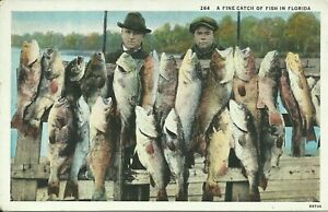 A-Fine-Catch-of-Fish-in-Florida-Fishermen-Fishing-1915-Postcard