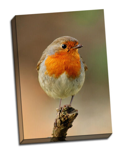 beautiful robin canvas prints set 3 christmas gift birthday framed picture bird