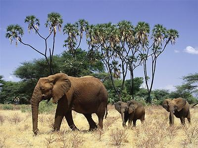 ELEPHANTS GLOSSY POSTER PICTURE PHOTO tusk trunk ears baby new safari decor 1026