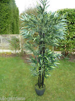 Artificial Plants - Large 6ft Bamboo Artificial Tree In A Stylish Pot - Office