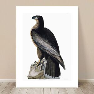 "FAMOUS BIRD ART ~ CANVAS PRINT 8x10"" ~ JOHN AUDUBON ~ Washington Eagle"