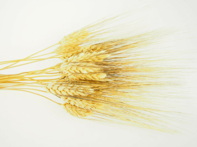 Large Dried Wheat Bunches Bundles Sheaves Vase Filler Home Decor