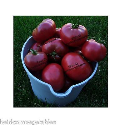 30 Cherokee Purple Tomato seeds. HEIRLOOM SAME DAY SHIPPING