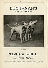 BULL TERRIER ENGLISH DOG Black & White Scotch Whisky Advert Buchanan's Red Seal