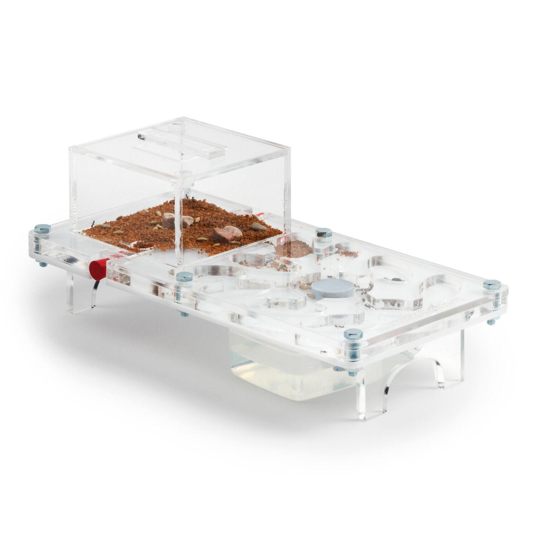 Ant Farm Mushroom Kit (Anthill, Formicarium, Educational, Ants)