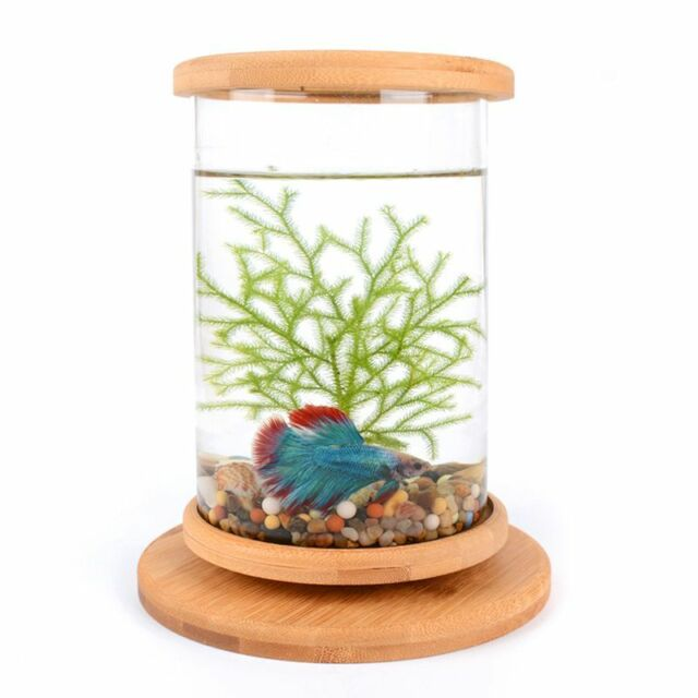 1pcs Glass Betta Fish Tank Bamboo Base Mini Decoration Accessories Rotate Bowl For Sale Online