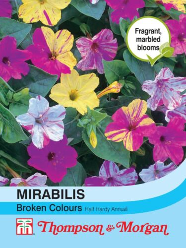 Mirabilis Jalapa Broken Colours Flowers Thompson /& Morgan 50 Seed