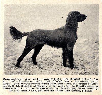 Aar Von Der Kurmark Deutsch-langhaar Jagdhunde & Züchter 1930-40