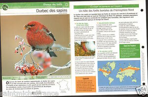 "Durbec des sapins Pinicola enucleator - Pine Grosbeak FICHE OISEAU BIRD - France - PORT GRATUIT A PARTIR DE 4 OBJETS BUY 4 ITEMS AND WORLDWIDE SHIPPING IS FREE EXCEPT USA, CANADA, AMERICA ONLY TRACKING MAIL FICHE TECHNIQUE, SPECIFICATION SHEET PAPIER GLACÉ, GLAZED PAPER RECTO-VERSO FORMAT 35 CM X 23,5 CM SIZE : 12.06"" X 8.28""  - France"
