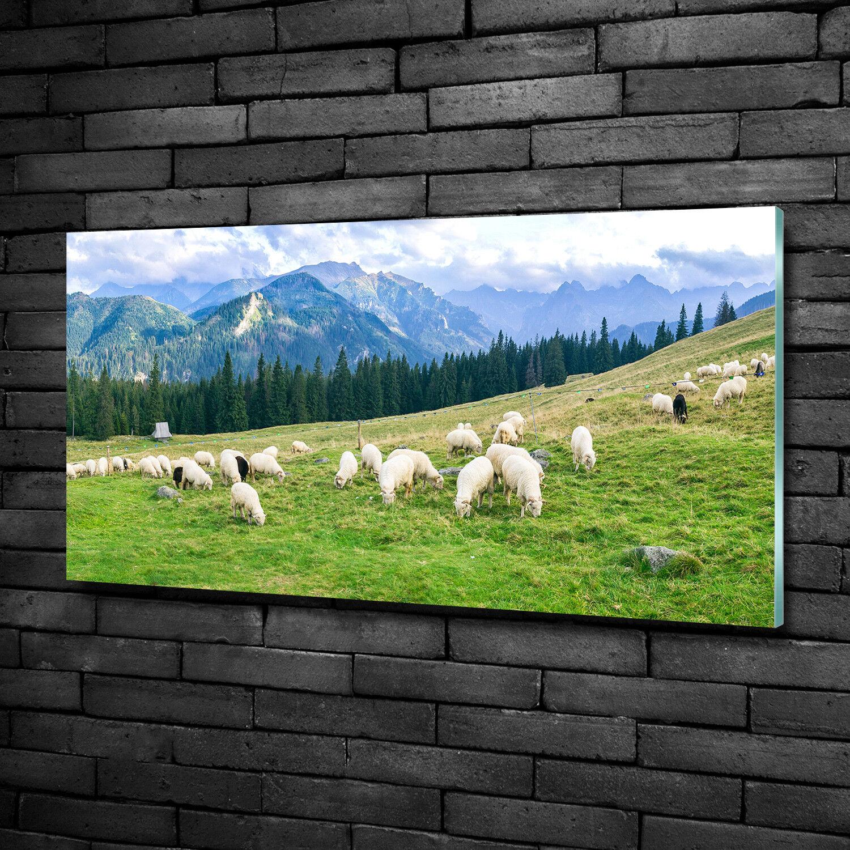 Vetro-Immagine Parete immagini Stampa su vetro 100x50 Decorazione paesaggi pecore montagne Tatra