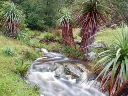 Exot graines schnellwüchsig Jardin zierpflanze RARE grasbaum