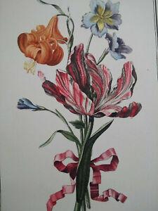 Planche botanique flore fleurs tulipes Matagon XIXème siècle signée Avril