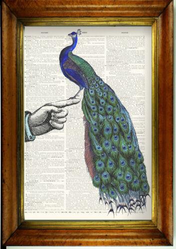 Retro Unique Surreal Art Victorian Vintage Dictionary Print: Peacock on Hand
