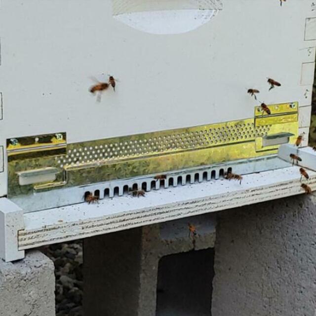 5Pcs Bee Hive Entrance Reducer Door Plastic Anti-escape Door Beekeeping Tools