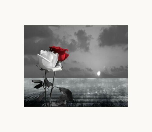 Black White Red Rose Floral Coastal Ocean Sunset Bedroom Photography Wall Art
