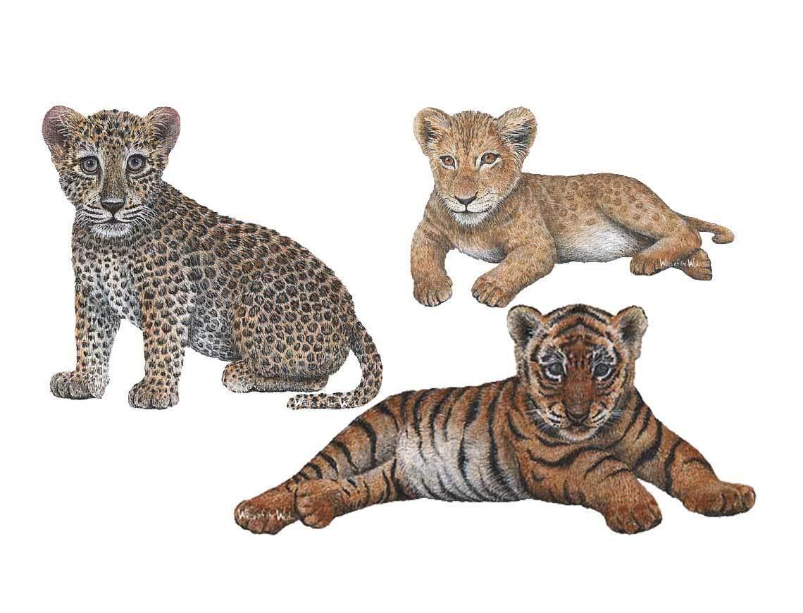 Parojo Sticker jungla raubkatzenbabys tiger Baby león bebé leopardo