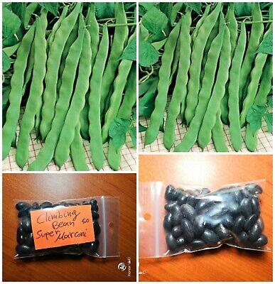 Extra Rare Pole Bean Climbing Bean /'/'Purple Podded/'/' ~50 Top Quality Seeds