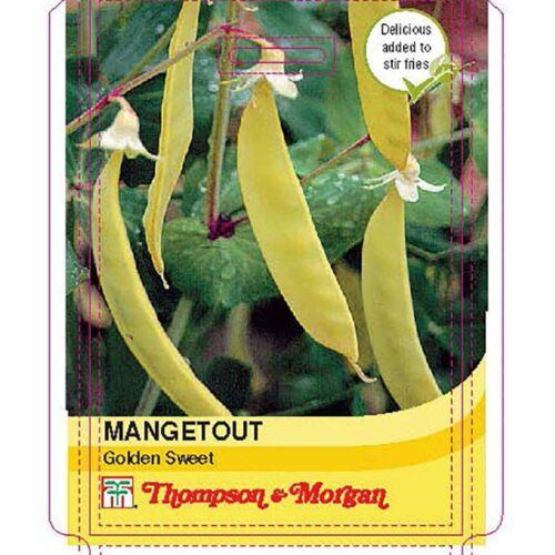 Zuckerschoten Golden Sweet 75 Samen Thompson /& Morgan