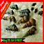 20-XL-LIVE-MALAYSIAN-TRUMPET-MTS-Freshwater-Aquarium-Pond-Feeder-Snails-Pets thumbnail 1