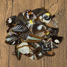 50 Pcs Real Butterfly Wings DIY Jewelry Artwork Art Handmade Craft Random Gift