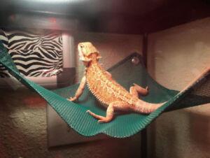 Reptile Hammock Breathable Mesh Bearded Dragon Lizard