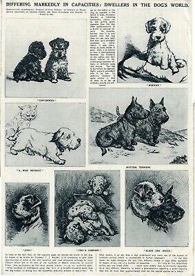 """LUCY DAWSON /""""MAC/"""" CAIRN TERRIER SEALYHAM TERRIER DOG FINE ART PRINT"""