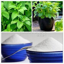 200 Stevia Rebaudiana Seeds Natural Sweetener TT176