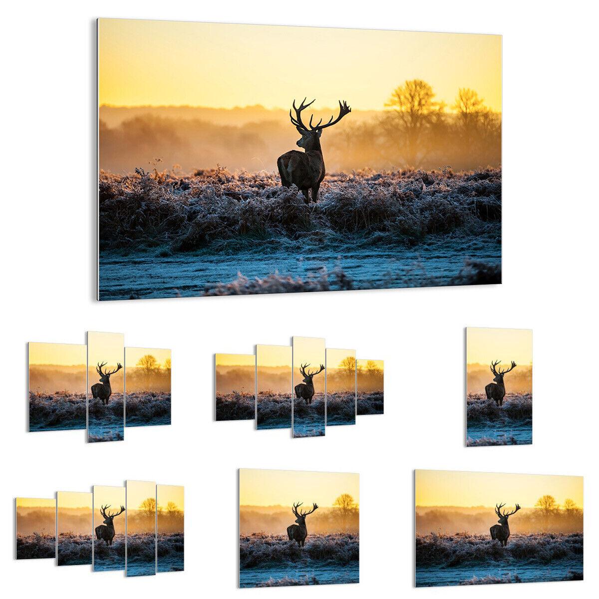 GLASBILD Wandbild Deko Feld Nebel Natur Baum 2428 DE