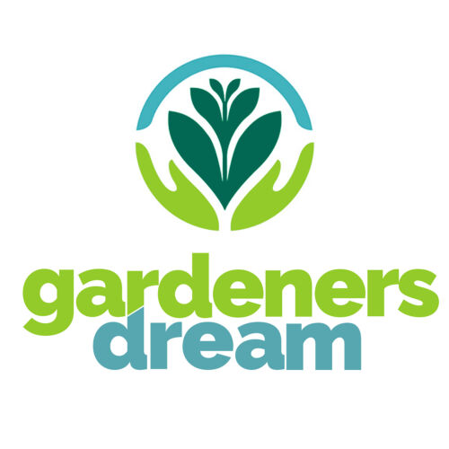 1 X HEBE /'GREEN MOUND/' EVERGREEN SHRUB HARDY GARDEN PLANT IN POT