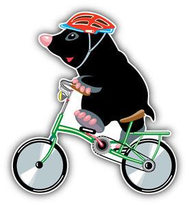 Mole Pirate Cartoon Car Bumper Sticker Decal 5/'/' x 5/'/'