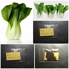 Bok Choy - Pak Choi Cabbage ''Hong Yok A1'' ~100+ Top Quality Seeds - Crispy
