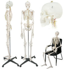 Life Size Medical Anatomical Human Skeleton Model With Rolling Stand 180cm708