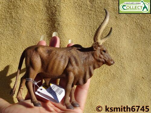 nouveau CollectA Ankole Watusi Bull solide Jouet en plastique Ferme Pet Animal Sauvage Zoo
