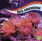 Sea Anemones by Jody S Rake (Hardback, 2016)