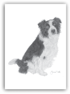 From Original Drawing By Artist Joanne T Kell DOG GREETING CARD BORDER COLLIE