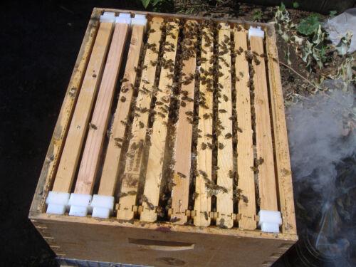 "Bee frames 20 Hybrid Deep 9 1//8/"" SPEHAR"