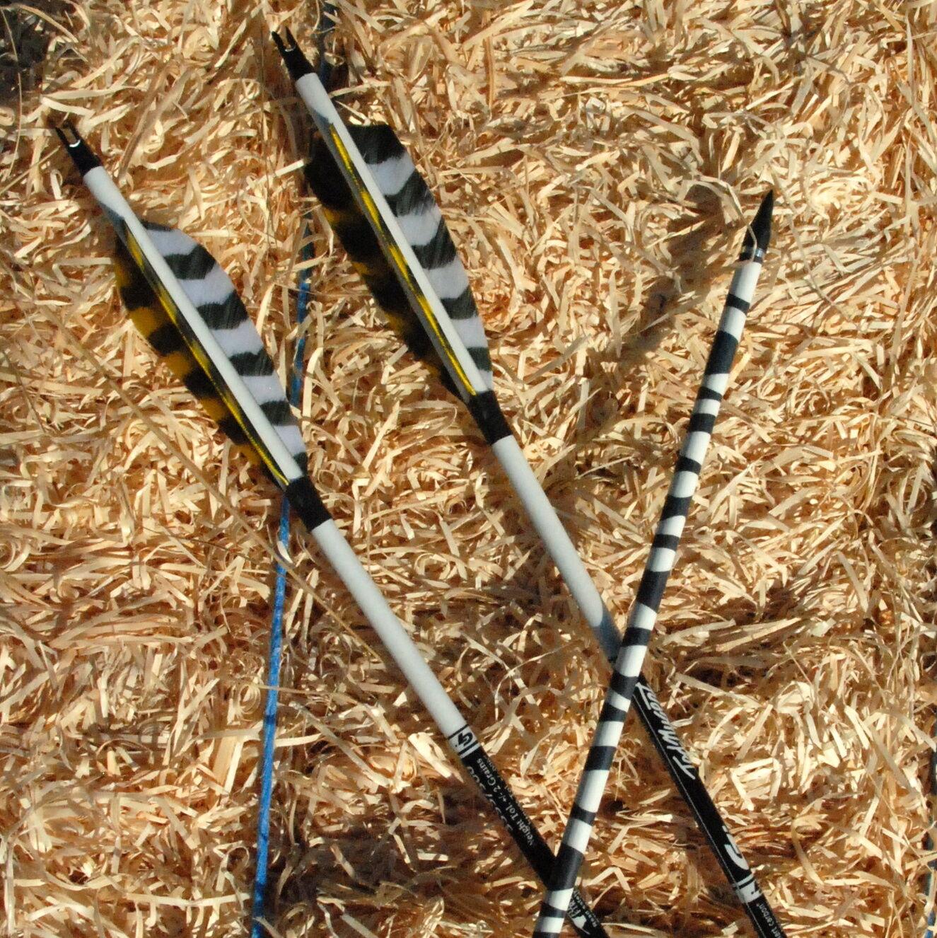 6 Carbonpfeile Ted Nugent Nugent Nugent Zebra ac2f0e