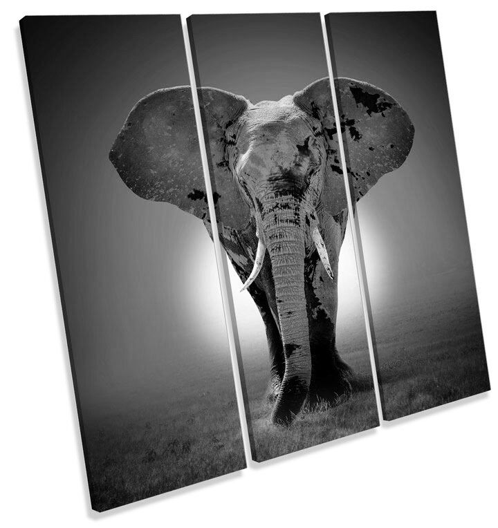Elephant Sunset B&W TREBLE CANVAS WALL ART Square Picture Print