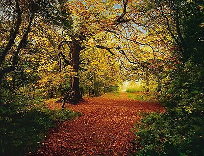 AUTUMN FOREST Photo Wallpaper Wall Mural NATURE LEAFY PATH  388x270cm
