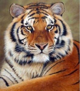"Counted Cross Stitch Kit ""Tiger"" by Andrea's Designs"