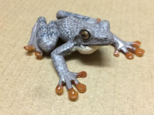 Buerger/'s frog 6 cm Colorata animal figure Collection Japan Kajika