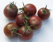 50 graines - TOMATE Black Cherry - Solanum Lycopersicum